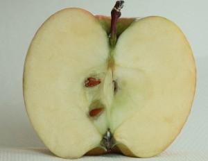Apfel-innen-01