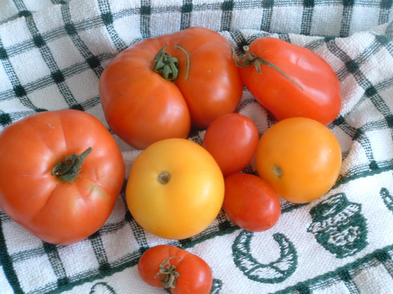Tomaten 024